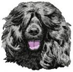 Portuguese Water Dog 2